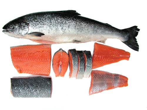 Salmon fish buy salmon fish product on for Salmon fish pictures