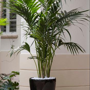 Rumah Dekoratif Tanaman Bonsai Pot Buatan Areca Palm Buy Tanaman