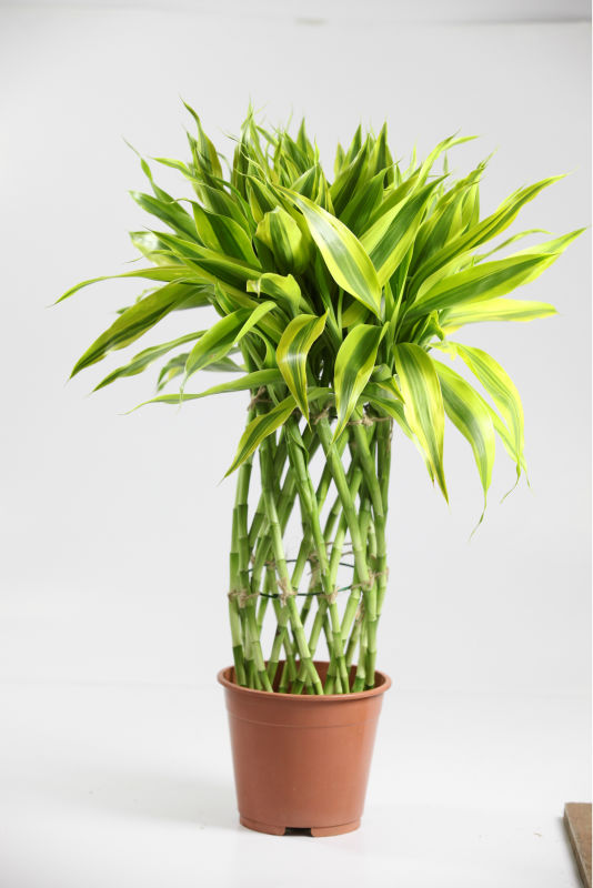 Exotic Plants And Foliage