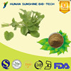 Natural Lemon Balm Extract 3% / 5%Rosmarinic Acid / Melissa officinalis Extract
