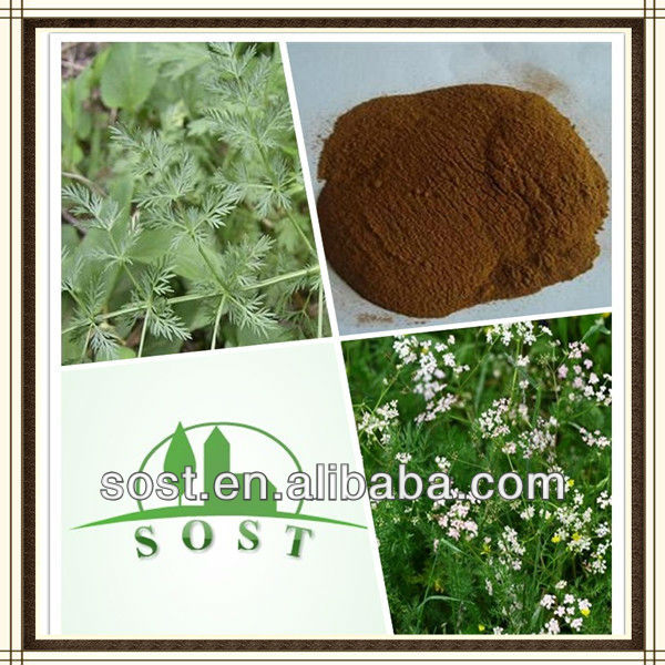 Factory Standard Plant Powder Caraway Extract