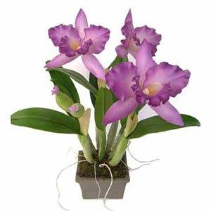 Handmade Thai Orchids