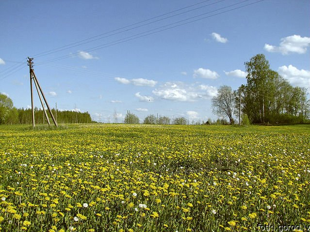 Agricultural land in Russia (Pskov area)