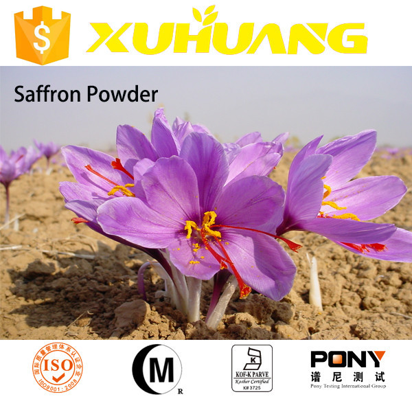 GMP factory supply saffron bulb sale/indian saffron price/saffron powder