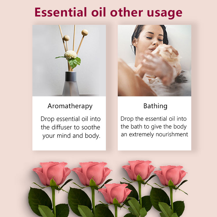 Private Label 100 Pure Bulgarian Rose Oil Extracting Plant Rose Essential Oil