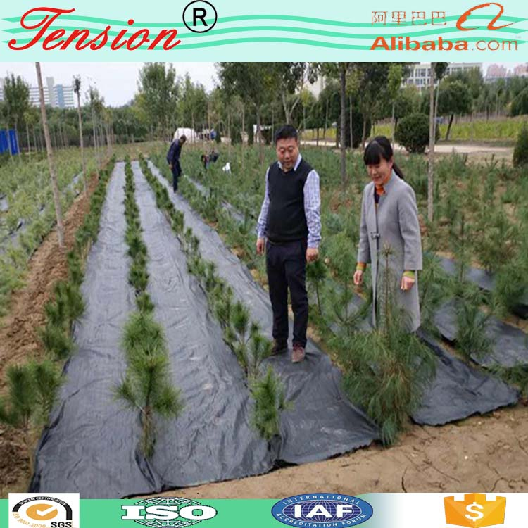 Chinese supplier garden plastic ground cover mesh