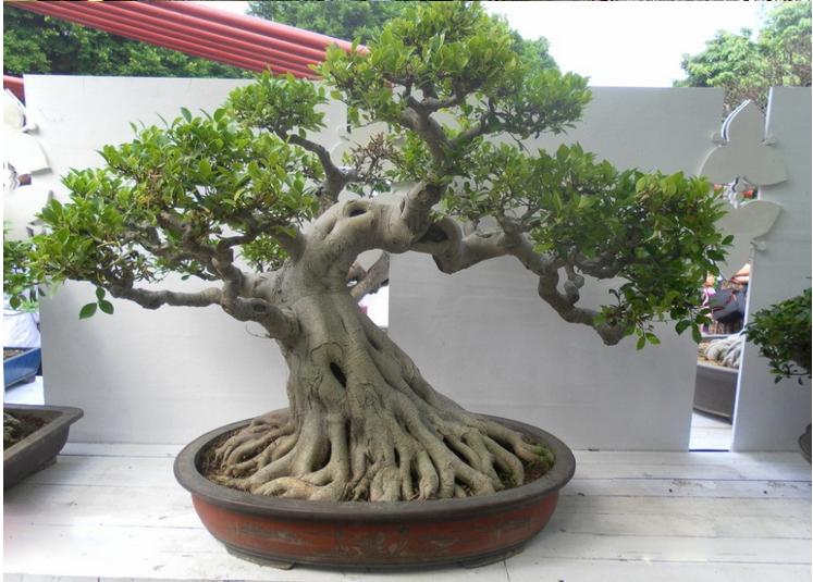 Latest Design Natural Plastic Artificial Banyan Tree Bonsai Plants With Mini