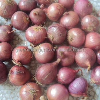 Onion Importers In Singapore Onion Price 1 Kg - Buy Onion Price 1 Kg,Onion  Price Product on Alibaba com