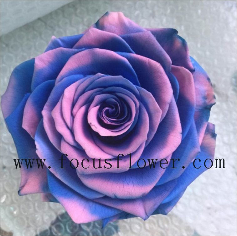 Export Direct Preserved Flowers In Glass Freeze Dried Roses From Yunnan