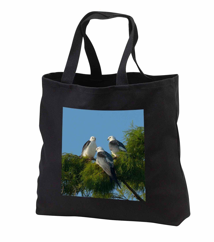 tb_230512 Danita Delimont - Birds - Swallow-tailed kites, Lake Woodruff, Florida, USA - Tote Bags