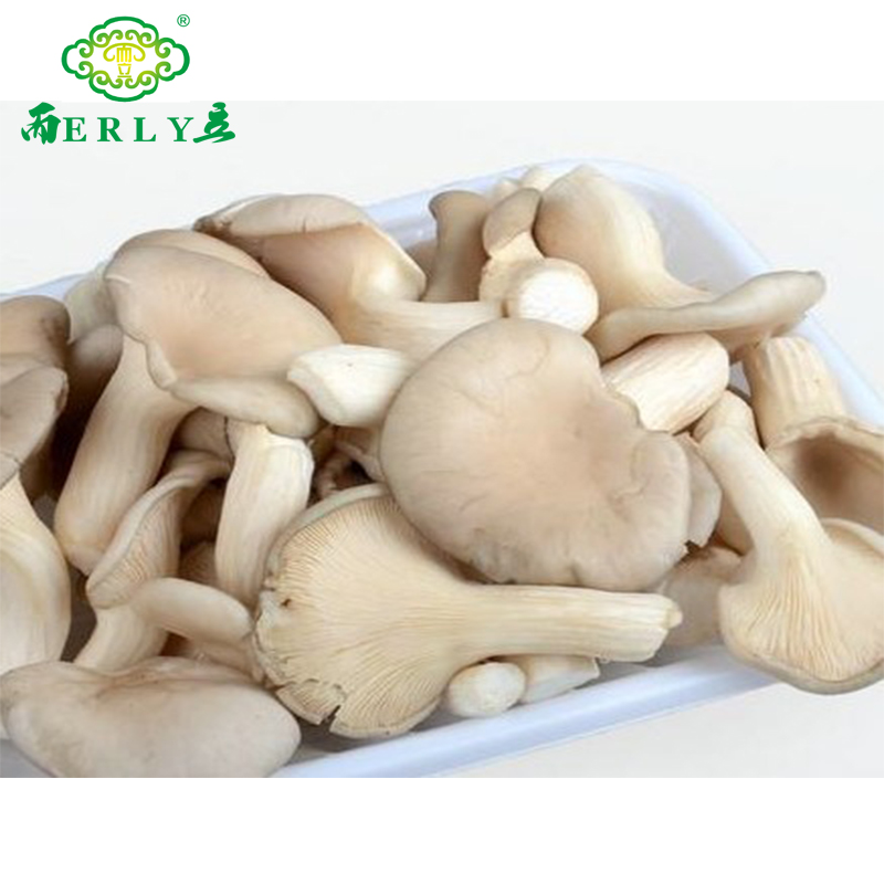 High quality healthy food grey oyster mushroom