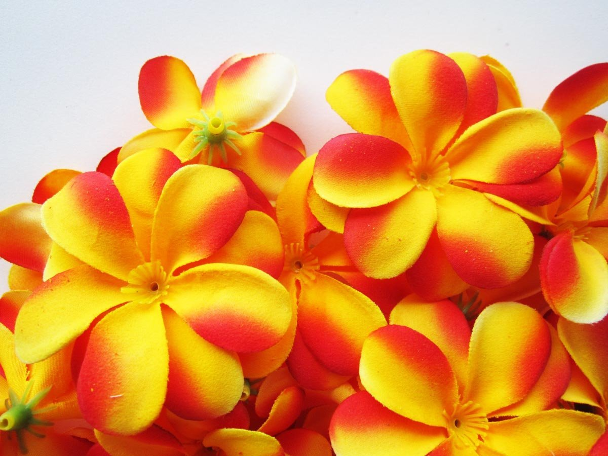 Cheap Red Frangipani Flowers Find Red Frangipani Flowers Deals On