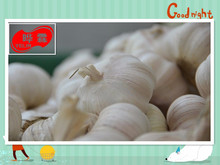 ISO9001/ISO14001/HACCP/Kosher/Gl... Certification and Fresh Style Fresh garlic