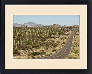 Framed Print of Cardon cacti by main road down Baja California, near Loreto, Mexico, North