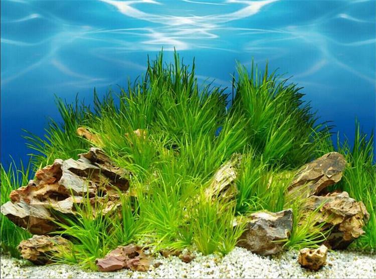 reptile aquarium backgrounds reptile aquarium backgrounds suppliers and manufacturers at alibabacom