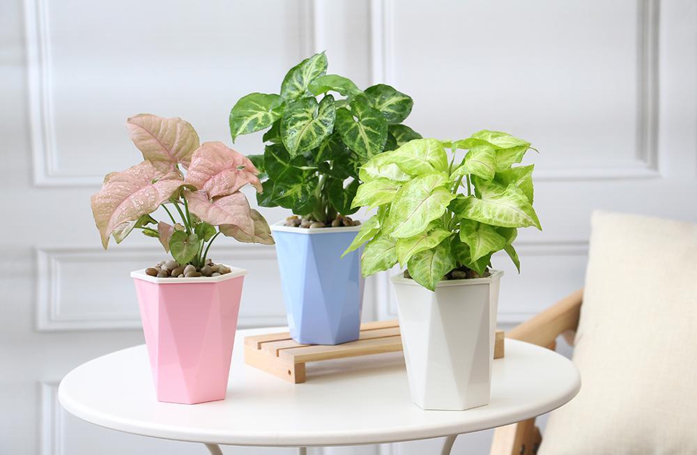 Amazon Best Seller Taman Planter Pot Bunga Bunga Buatan Pot Bunga Hidroponik Dekorasi Buy Dekoratif Pekebun Hidroponik Pot Bunga Pot Bunga Buatan