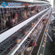 Hightop chicken cage A type poultry farm layer eggs chicken cages