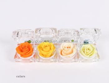 86+ Gambar Bunga Mawar Merah Romantis Paling Bagus