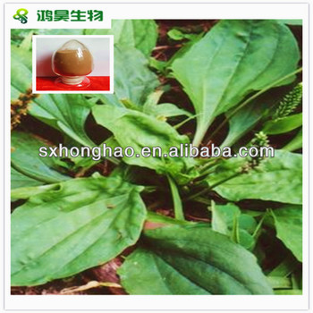 plantago lanceolata leaf extract