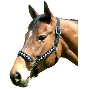 Intrepid International Leather Crown Diamond Halter with Padded Nose