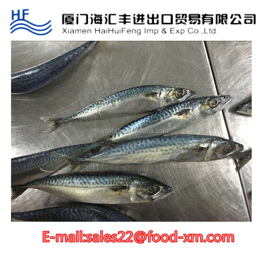 importer buy mackerel frozen fish meat
