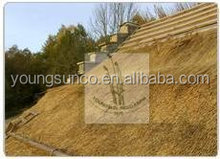 water reed roof thatching