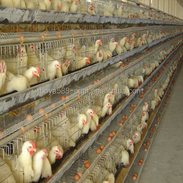 Commercial Chicken House high quality automatic china industrial chicken coop hen house