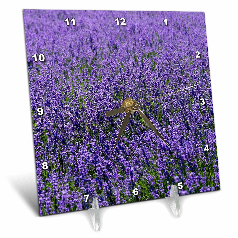 Danita Delimont - Flower - Lavender, Furano, Hokkaido Prefecture, Japan - 6x6 Desk Clock (dc_225872_1)