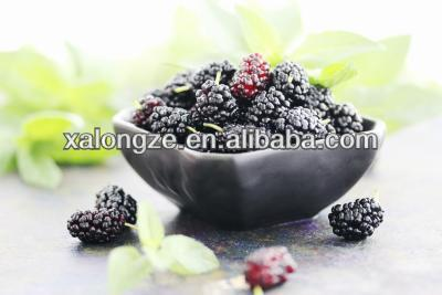 mulberry fruit extract anthocyanins & anthocyanidins for skin