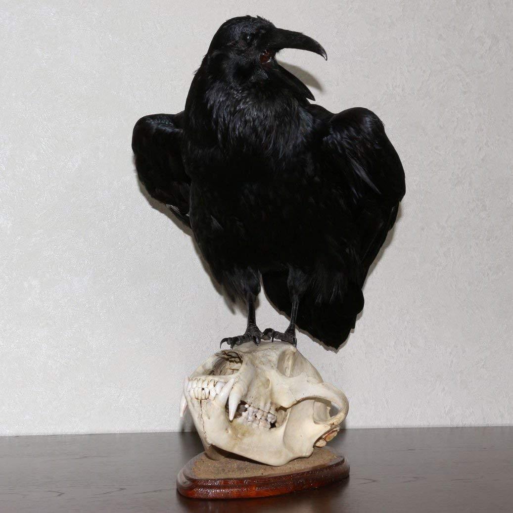 Buy Carved Ram Skull Taxidermy Animal Skull Carving Wall