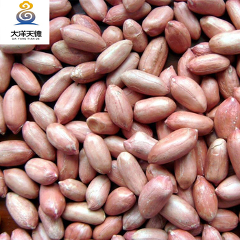 Professional Manufacturer Red Skin Peanut In China