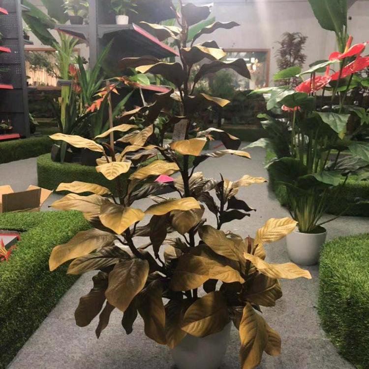 Decorazioni Natalizie Con Foglie Di Magnolia.Scegliere Produttore Alta Qualita Magnolia Foglia