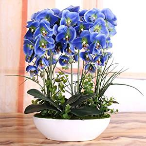 Nearly Natural Décor Artificial PU Phalaenopsis Flower Decorative, European Contracted Modern Flower Arrangement Art PU Flower Arrangement in Creative Ceramic Vase, Butterfly Orchid (Blue)