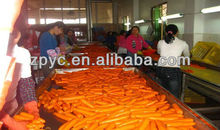 cheap China red fresh carrot