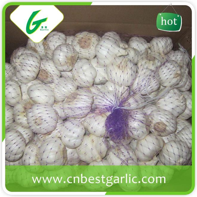 For sale best garlic products wholesale