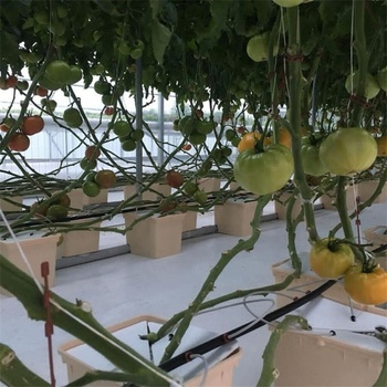 Wholesale Agricultural hydroponics system dutch bucket with lowest price