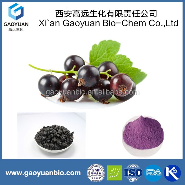 Gaoyuan Supply Black Currant Extract / Proanthocyandins 70%/ Anthocyanin 25%/ Soften Blood Vessel Plant Extract