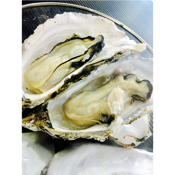 new concept 29474 2eec3 Japanese seafood companies for sale oyster, Wholesale frozen seafood japan  importer