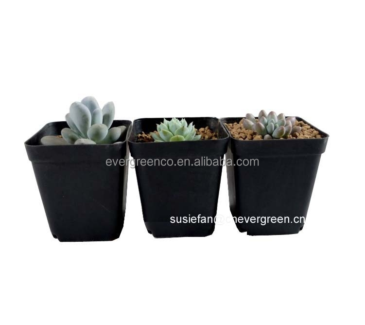 70mm black square flower pot