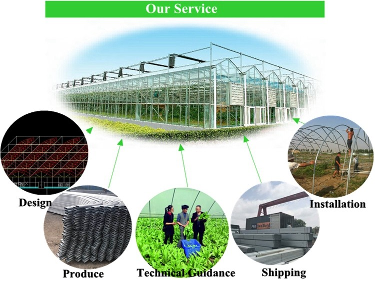 Single Span Commercial Plastic Blackout Greenhouse For
