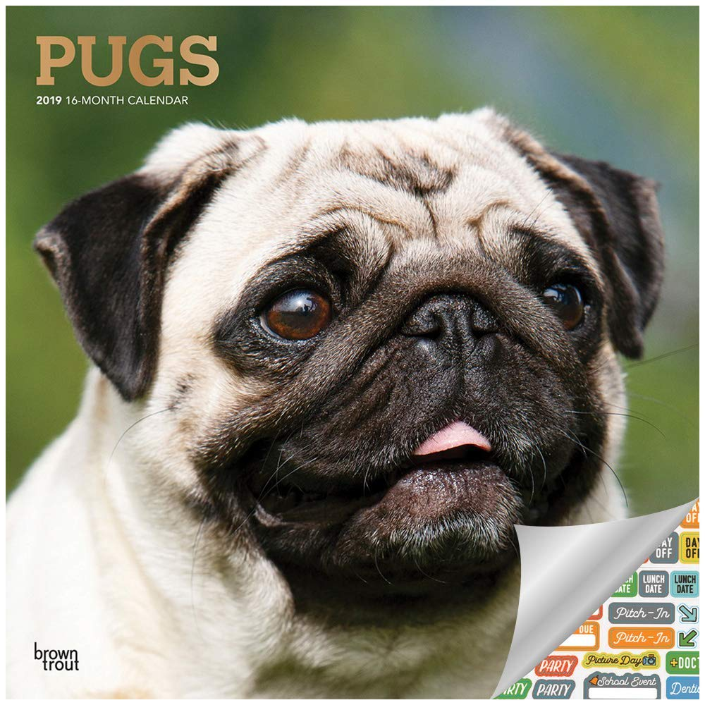 71faa3dd6f5 Pugs Calendar 2019 Set - Deluxe 2019 Pugs Wall Calendar with Over 100  Calendar Stickers (