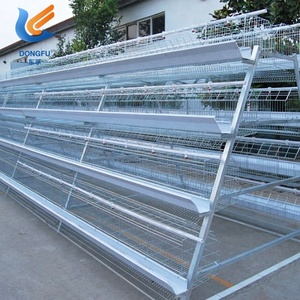 Battery Cage Chicken Layer