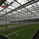 China Supplier Greenhouse Used Seedbed System