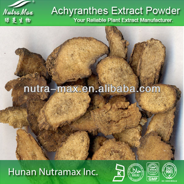 High quality Achyranthes Extract Powder,10% olc
