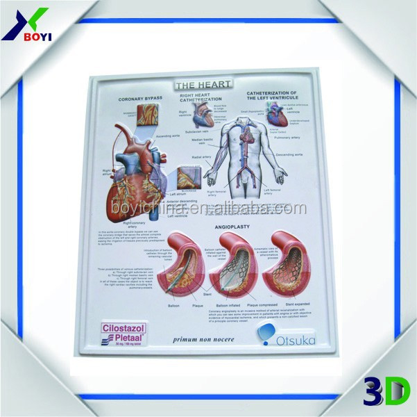 3D PVC poster with anatomical picture chart