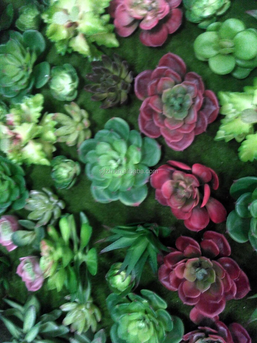 Nieuw ontwerp en heet verkoop artifici le verticale tuin planten vetplanten wandbekleding - Ontwerp wandbekleding ...