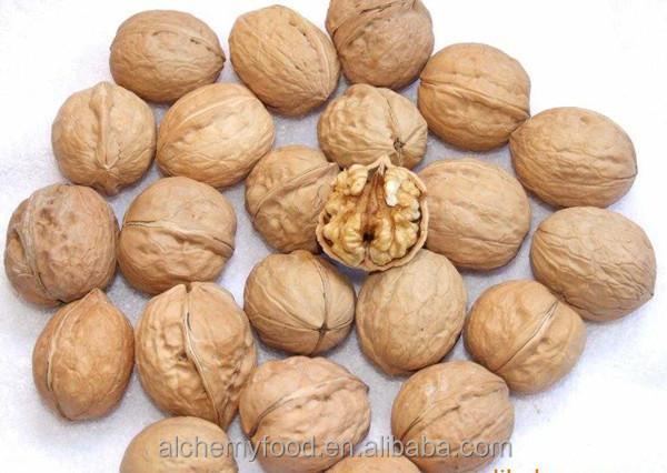Chinese Organic Walnuts In Shell / Dry Fruit Walnut