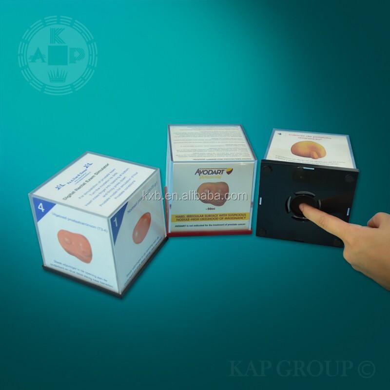 Plástico Estimulador De Próstata Anatomía Humana Próstata Modelo De ...