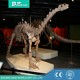 Professional Museum Quality Resin Dinosaur Skeleton Replicas