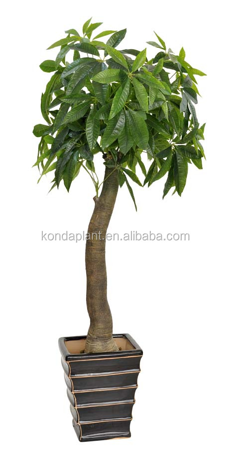 artificial small bonsai plants. plastic indoor plants. fake money